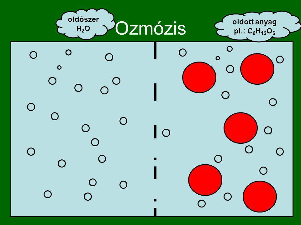 Ozmózis oldószer H2O oldott anyag pl.: C6H12O6