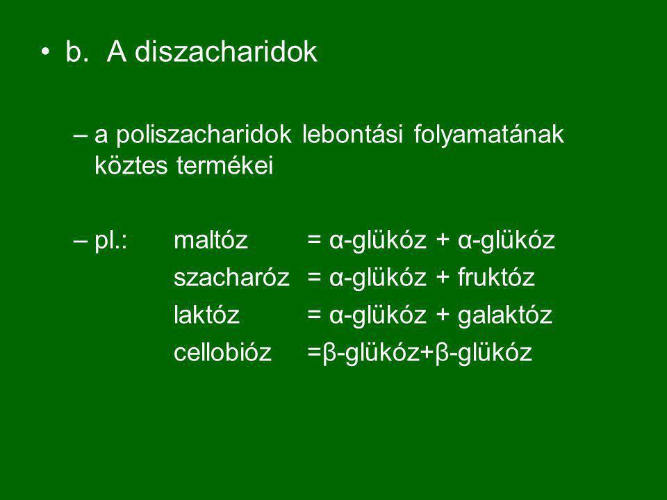 b. A diszacharidok a poliszacharidok lebontási folyamatának köztes termékei. pl.: maltóz = α-glükóz + α-glükóz.