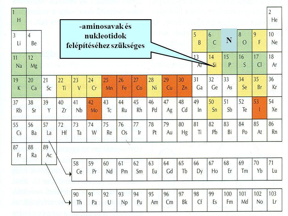 -aminosavak és nukleotidok felépítéséhez szükséges