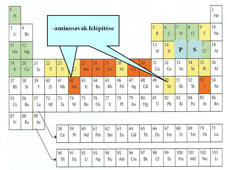 -aminosavak felépítése -foszfatidok felépítése