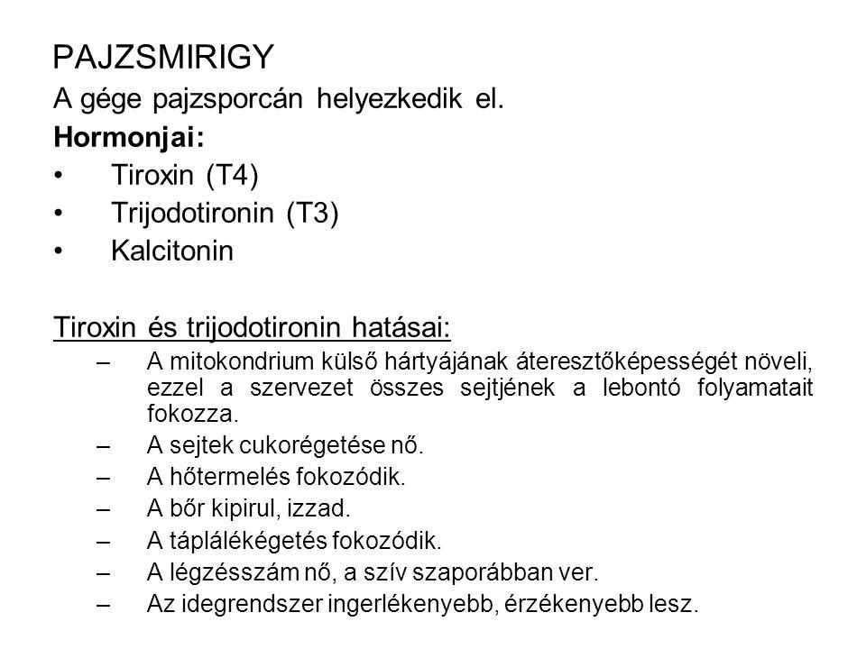 PAJZSMIRIGY A gége pajzsporcán helyezkedik el. Hormonjai: Tiroxin (T4)