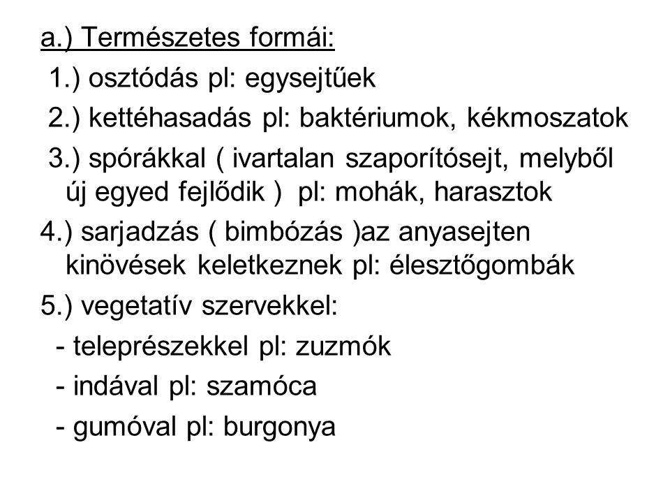 a. ) Természetes formái: 1. ) osztódás pl: egysejtűek 2