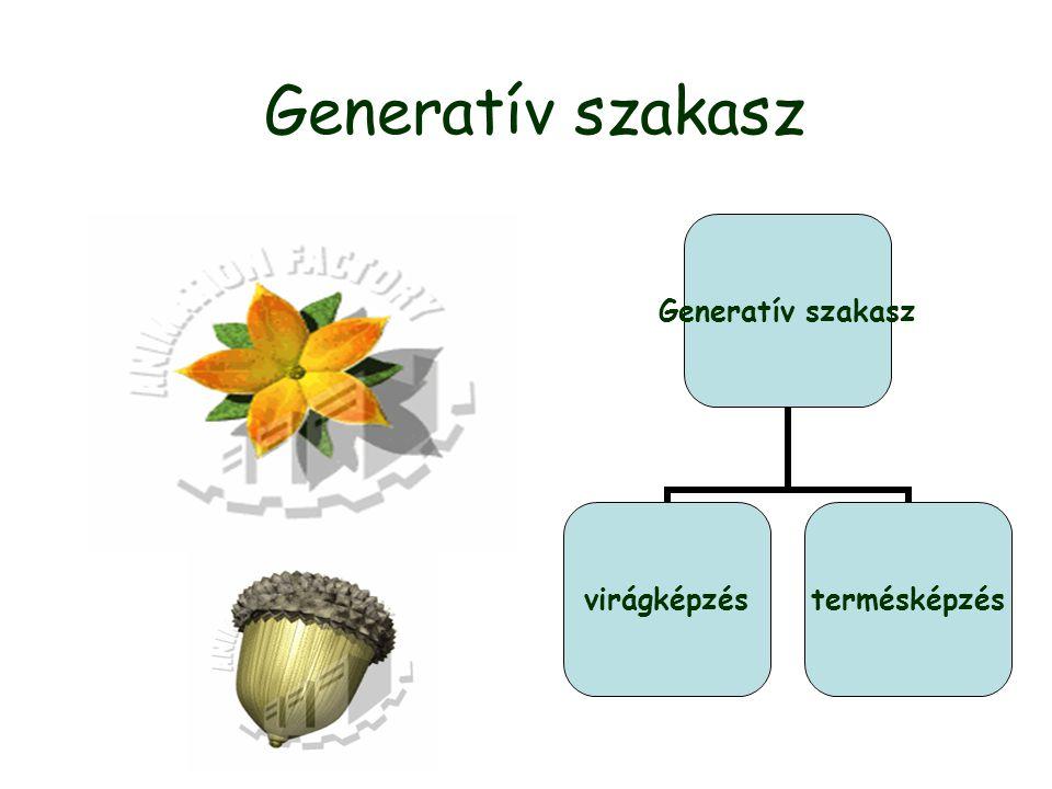 Generatív szakasz