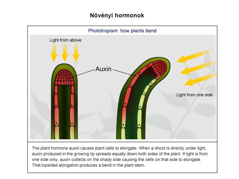 Növényi hormonok