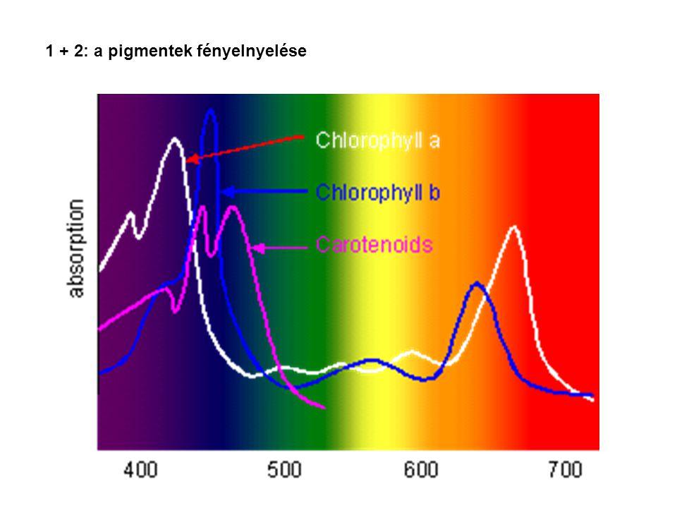 1 + 2: a pigmentek fényelnyelése