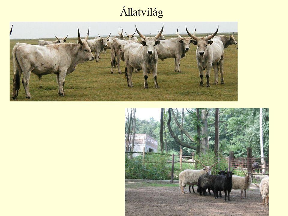 Állatvilág