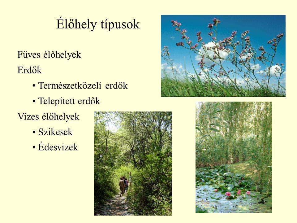 Élőhely típusok Füves élőhelyek Erdők Természetközeli erdők