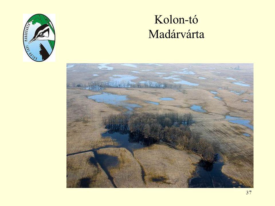 Kolon-tó Madárvárta