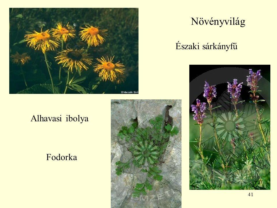Növényvilág Északi sárkányfű Alhavasi ibolya Fodorka