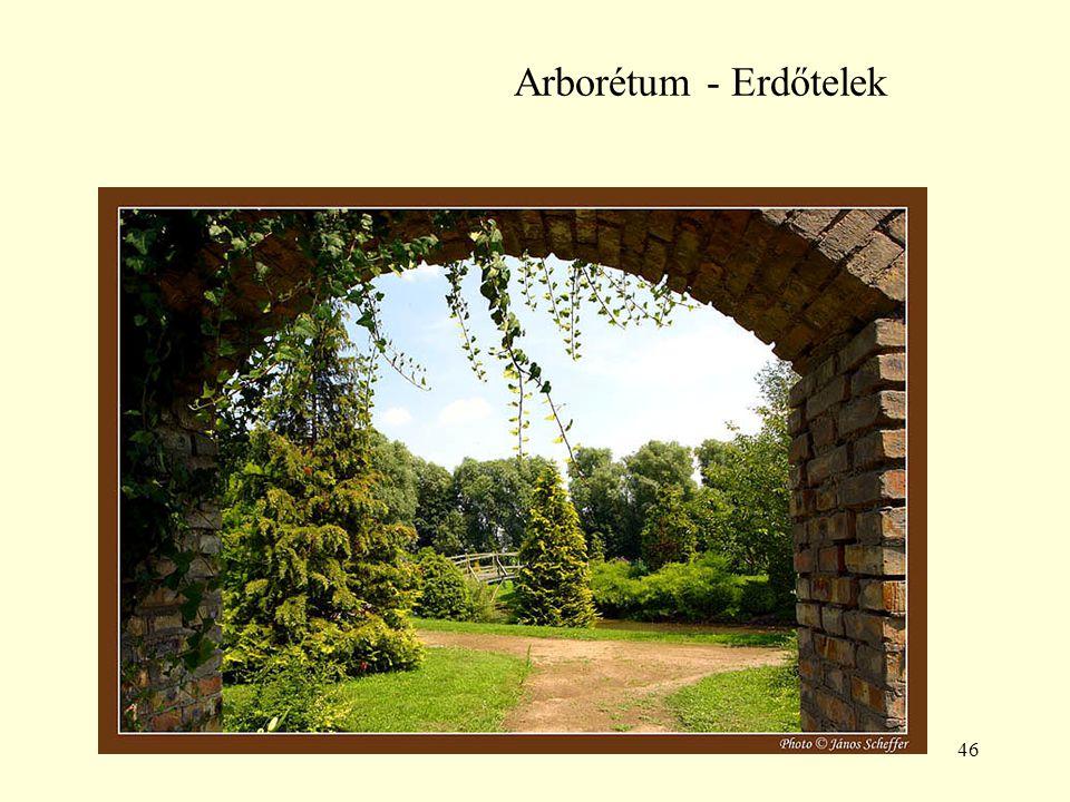 Arborétum - Erdőtelek
