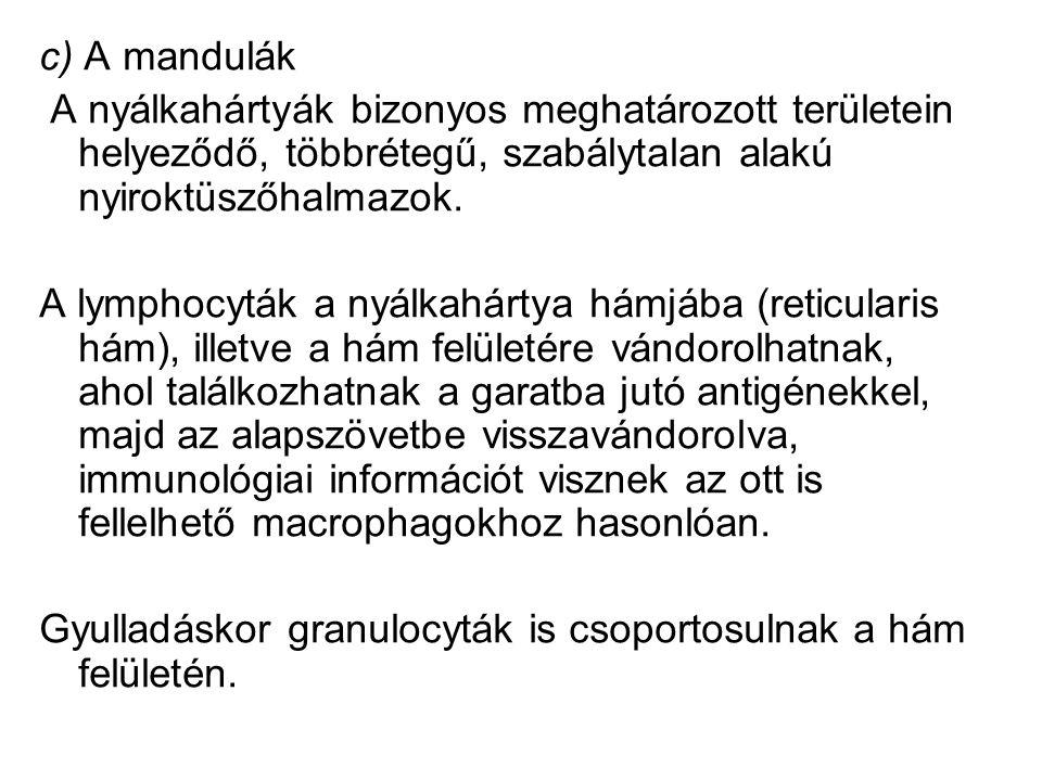 c) A mandulák A nyálkahártyák bizonyos meghatározott területein helyeződő, többrétegű, szabálytalan alakú nyiroktüszőhalmazok.