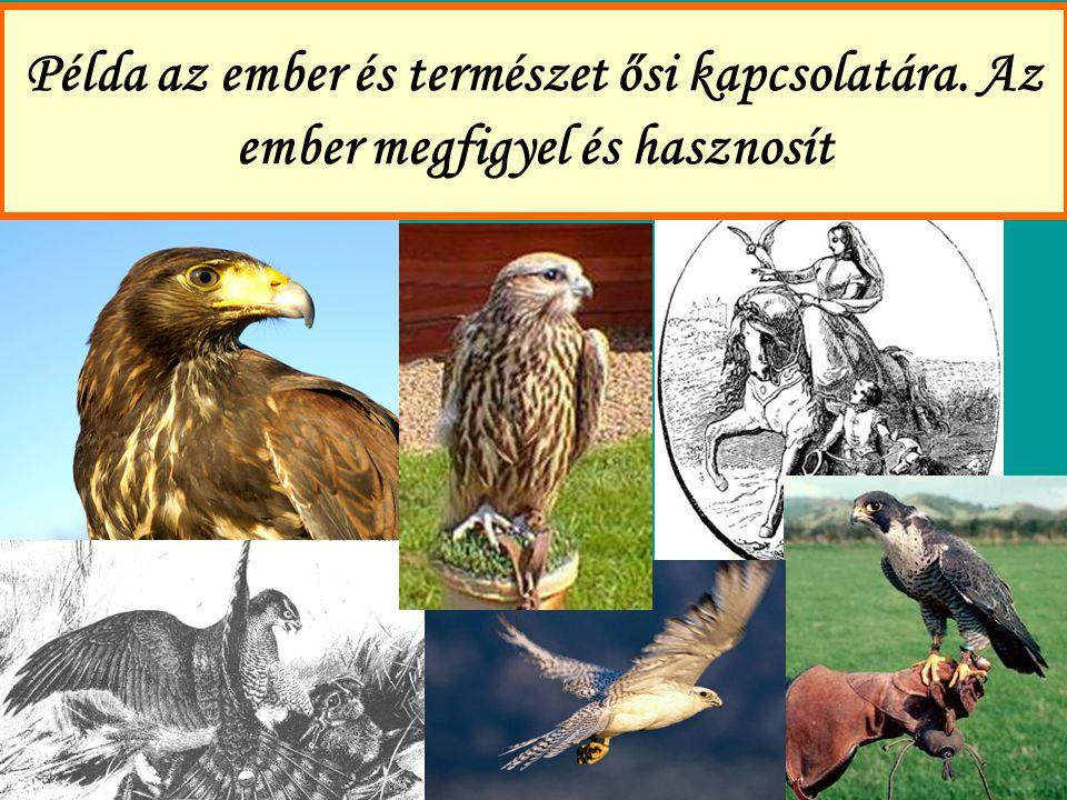Példa az ember és természet ősi kapcsolatára