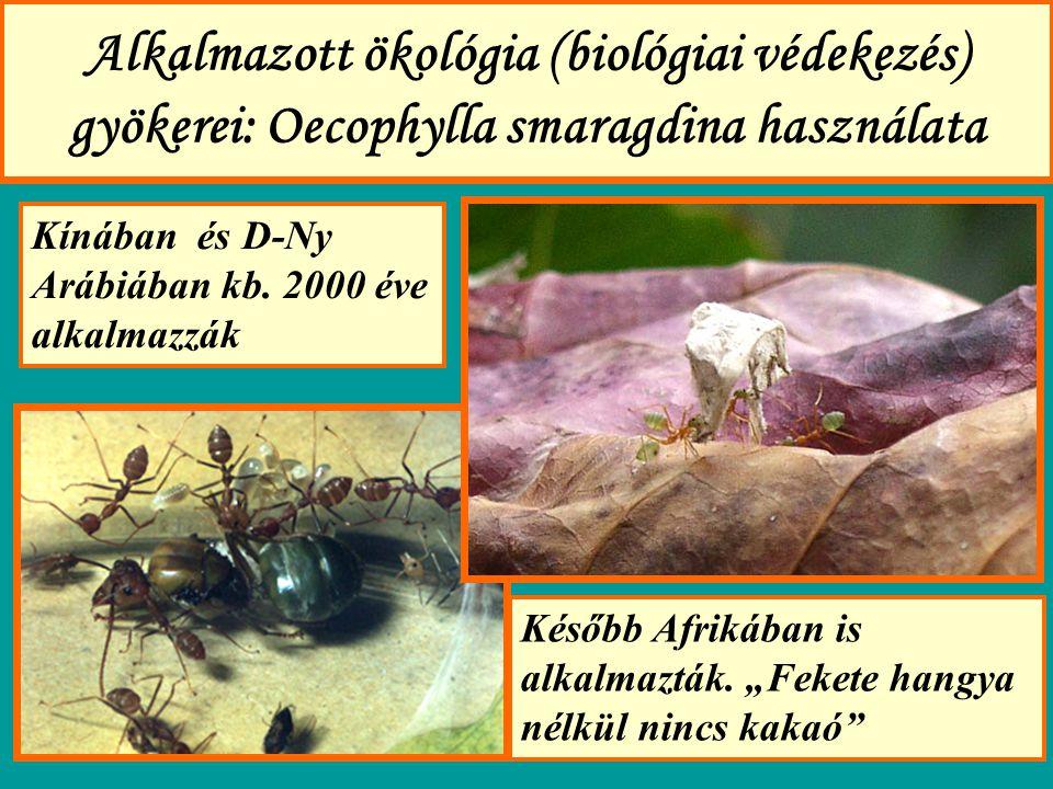 Alkalmazott ökológia (biológiai védekezés) gyökerei: Oecophylla smaragdina használata