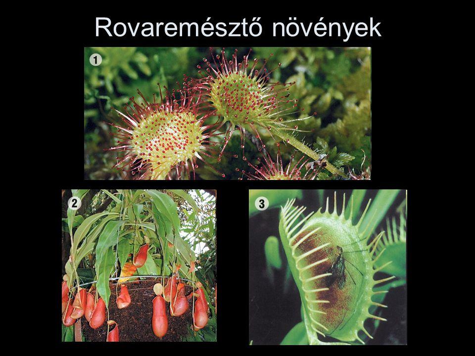 Rovaremésztő növények