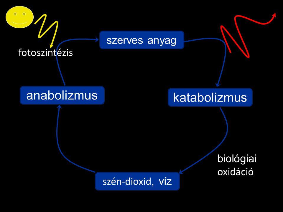 anabolizmus katabolizmus szerves anyag fotoszintézis biológiaioxidáció