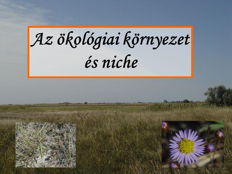 Az ökológiai környezet és niche