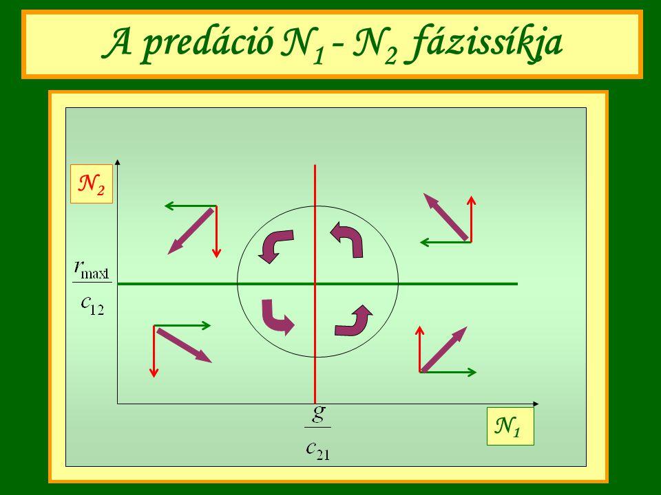 A predáció N1 - N2 fázissíkja