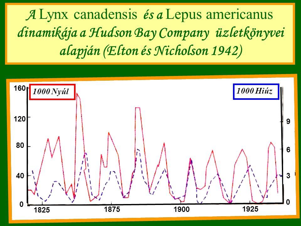 A Lynx canadensis és a Lepus americanus dinamikája a Hudson Bay Company üzletkönyvei alapján (Elton és Nicholson 1942)