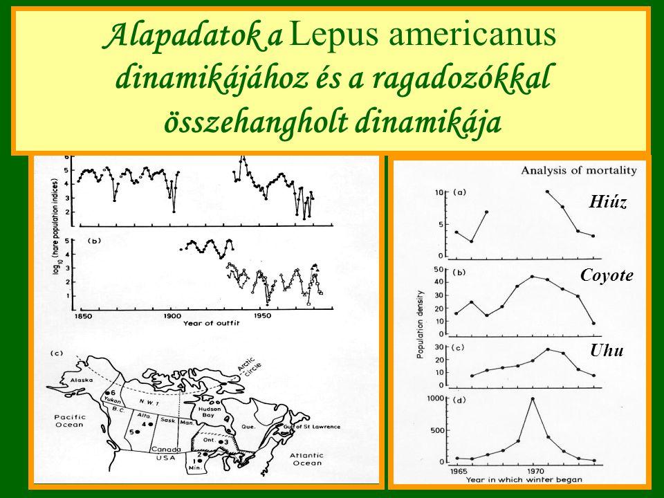 Alapadatok a Lepus americanus dinamikájához és a ragadozókkal összehangholt dinamikája