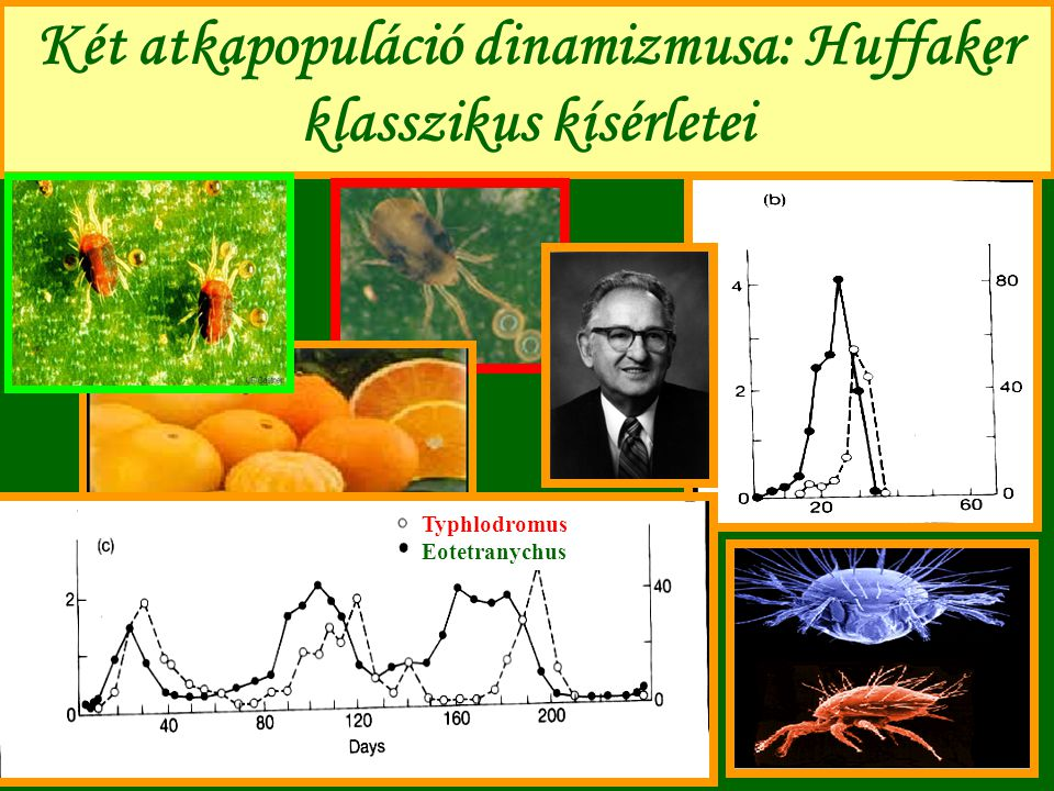 Két atkapopuláció dinamizmusa: Huffaker klasszikus kísérletei