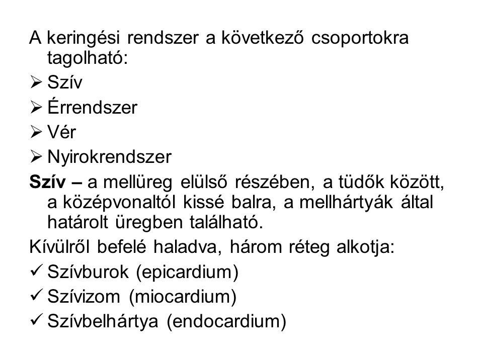 A keringési rendszer a következő csoportokra tagolható: