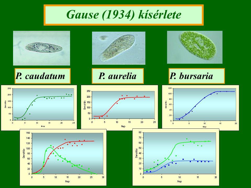 Gause (1934) kísérlete P. caudatum P. aurelia P. bursaria