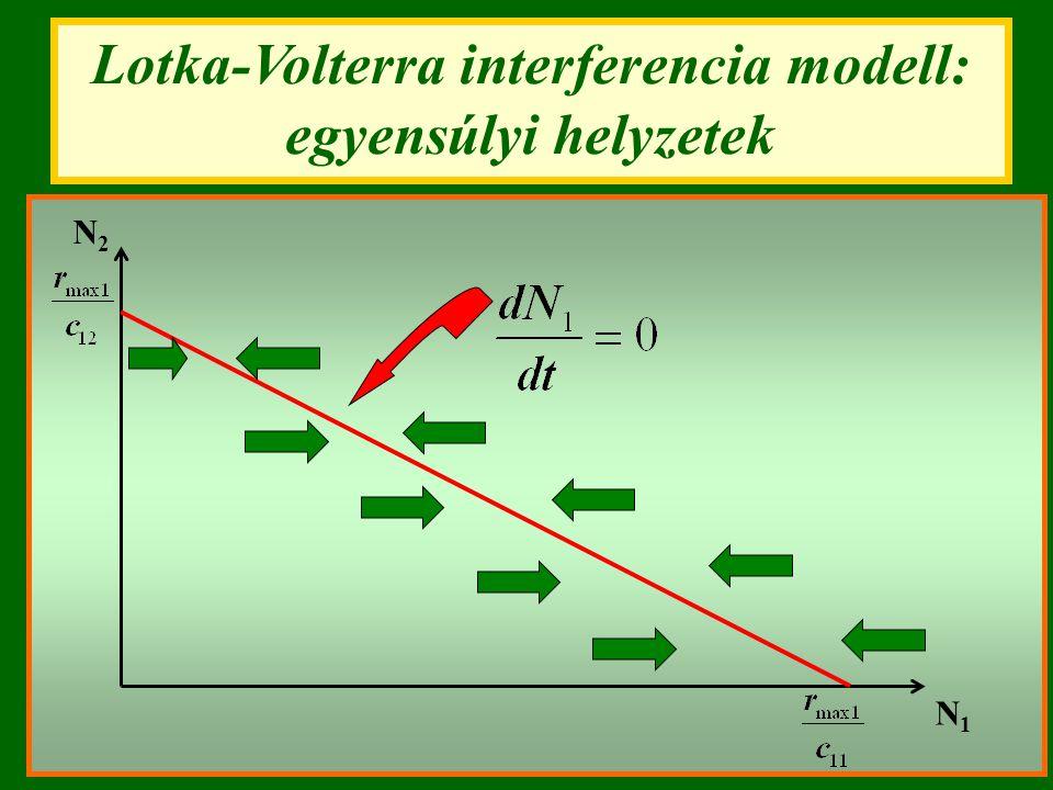 Lotka-Volterra interferencia modell: egyensúlyi helyzetek