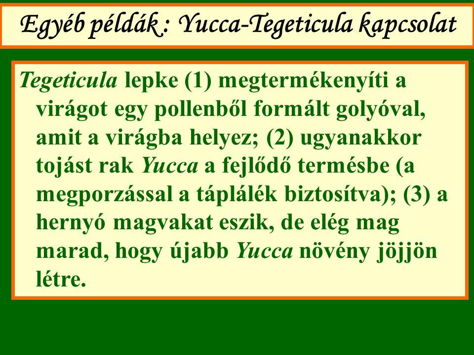 Egyéb példák : Yucca-Tegeticula kapcsolat