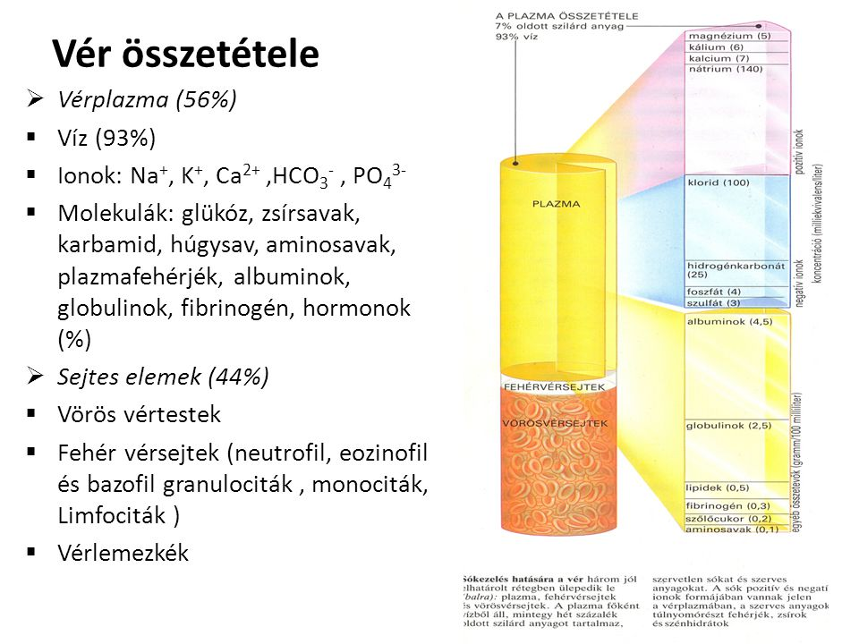 Vér összetétele Vérplazma (56%) Víz (93%)