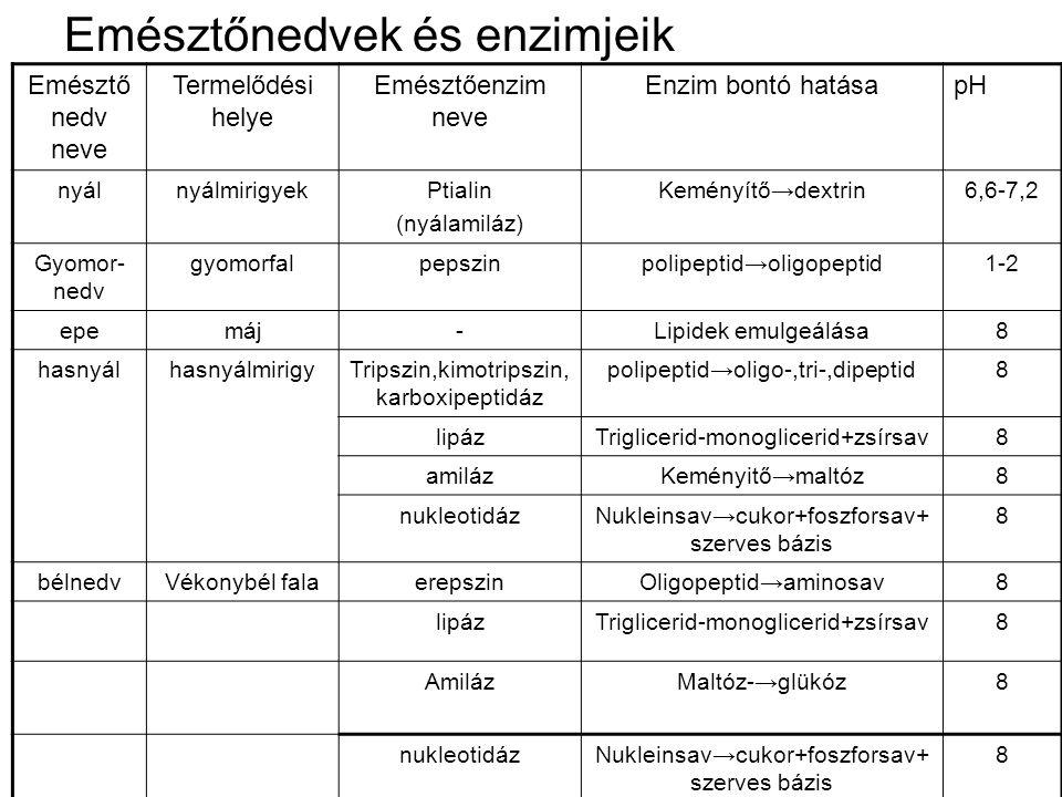 Emésztőnedvek és enzimjeik