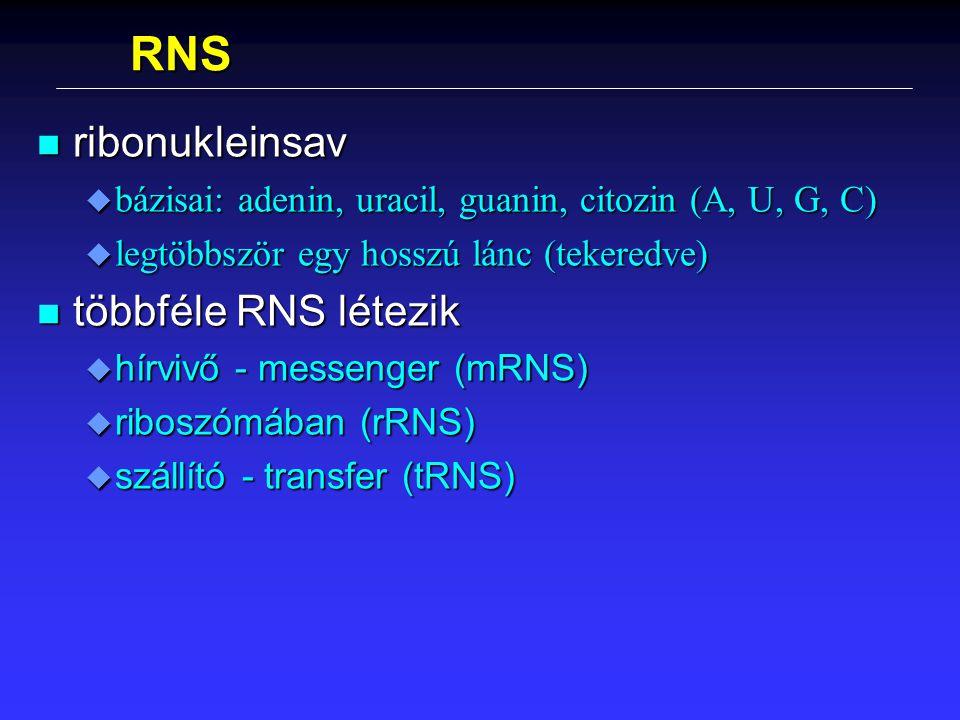RNS ribonukleinsav többféle RNS létezik