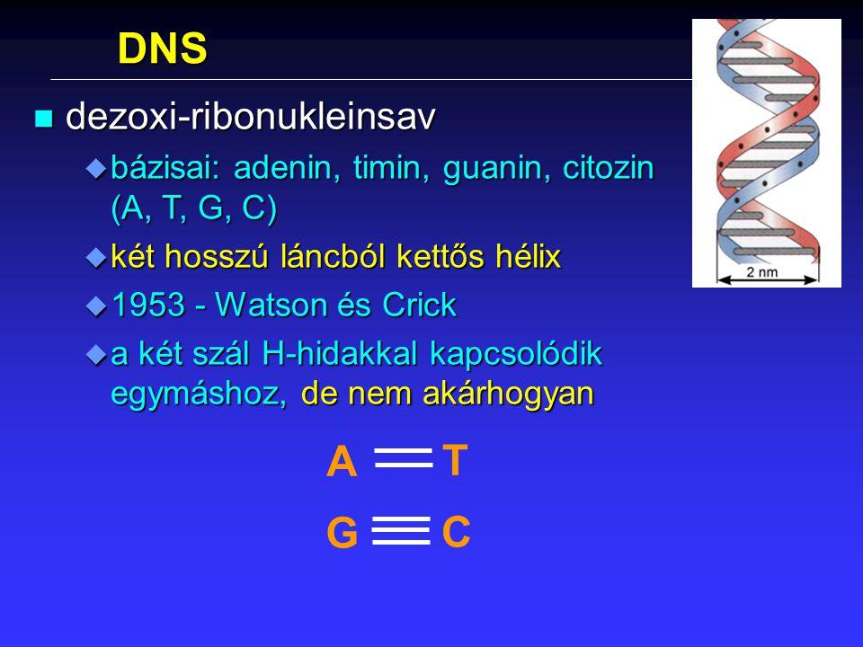 DNS A T G C dezoxi-ribonukleinsav