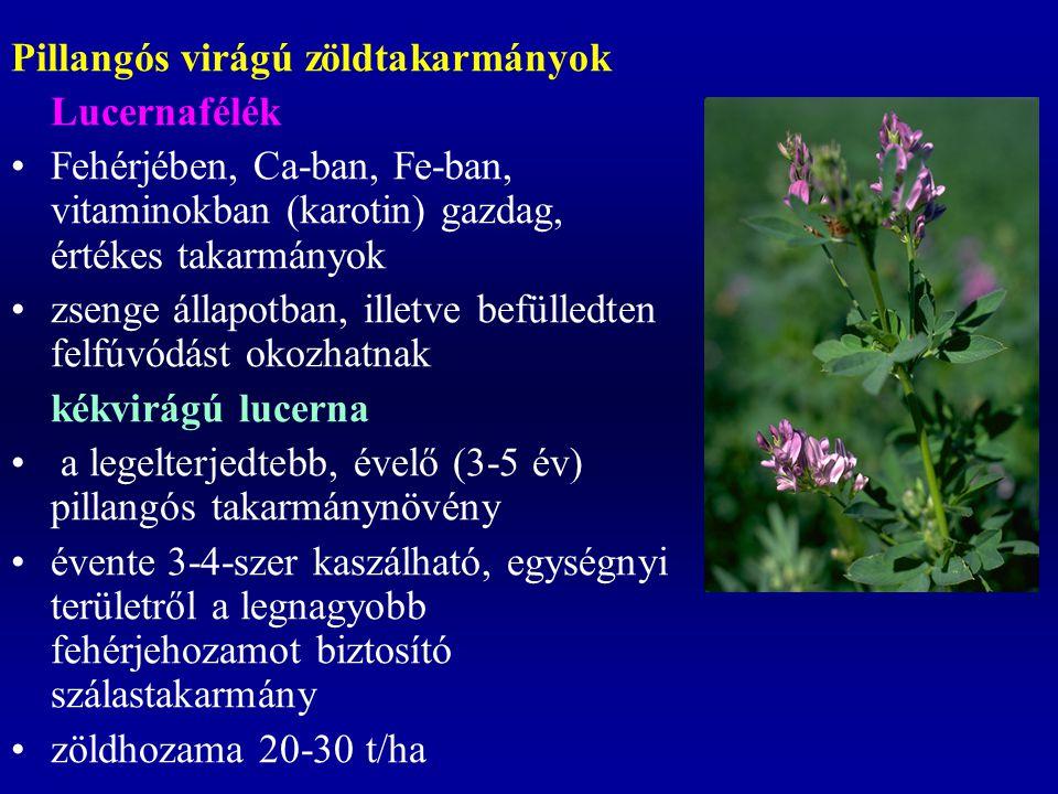 Pillangós virágú zöldtakarmányok