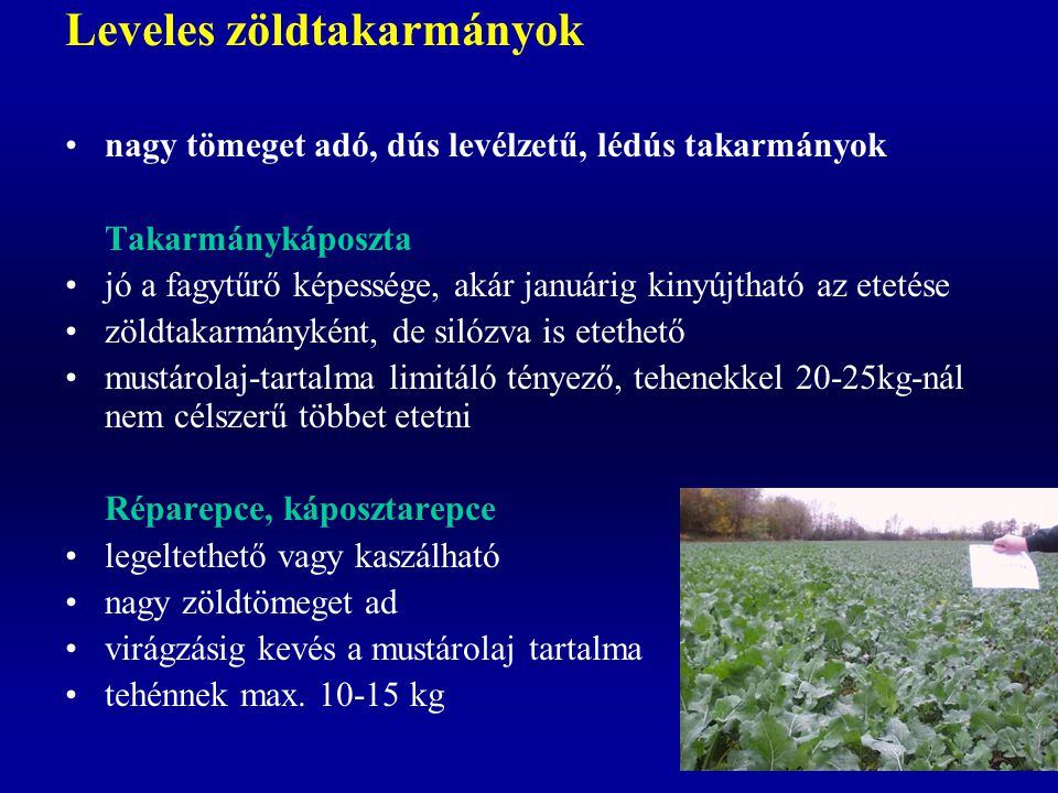 Leveles zöldtakarmányok