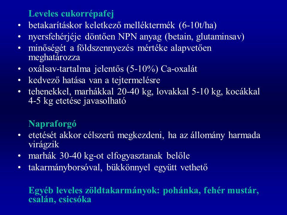 Leveles cukorrépafej betakarításkor keletkező melléktermék (6-10t/ha) nyersfehérjéje döntően NPN anyag (betain, glutaminsav)