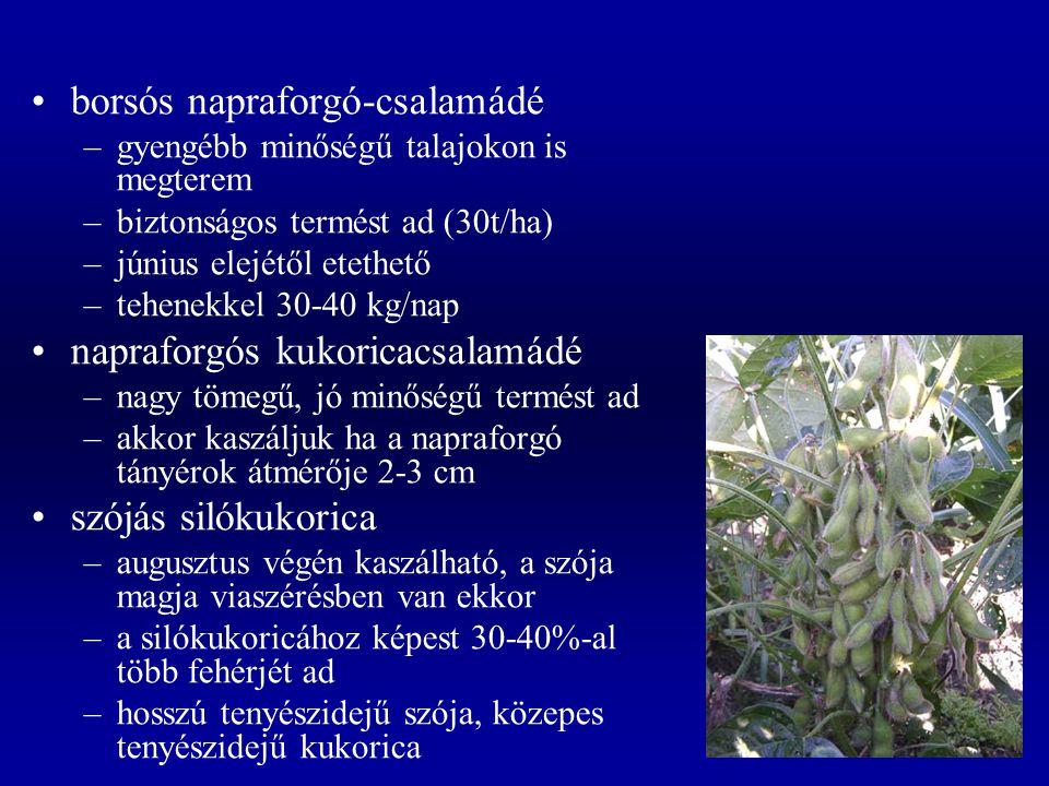 borsós napraforgó-csalamádé