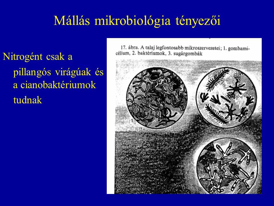 Mállás mikrobiológia tényezői