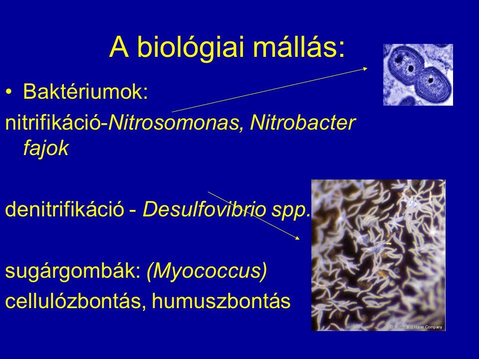 A biológiai mállás: Baktériumok: