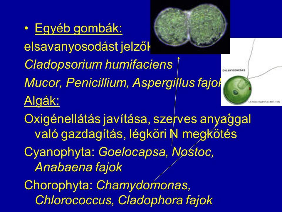 Egyéb gombák: elsavanyosodást jelzők. Cladopsorium humifaciens. Mucor, Penicillium, Aspergillus fajok.
