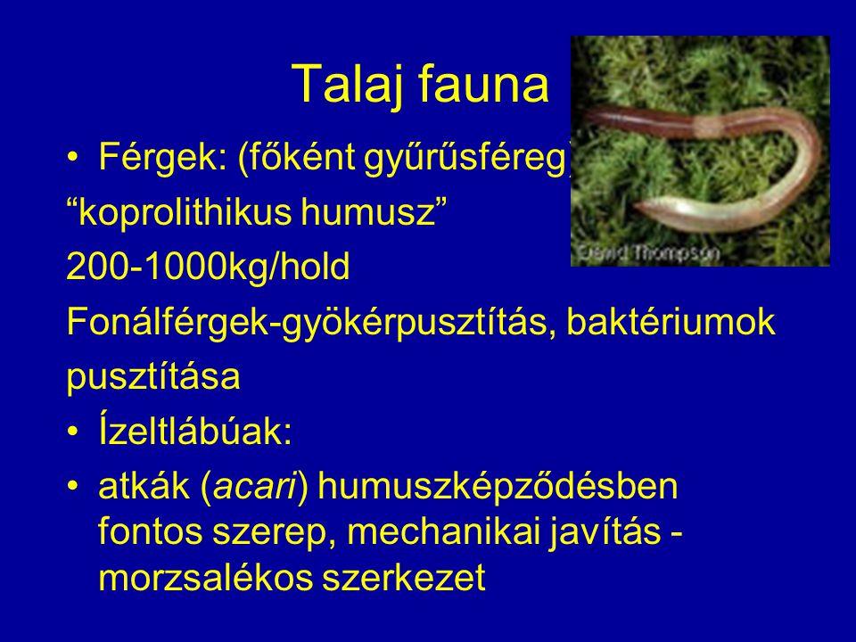 Talaj fauna Férgek: (főként gyűrűsféreg) koprolithikus humusz
