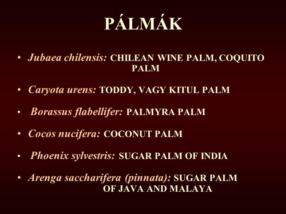 PÁLMÁK Jubaea chilensis: CHILEAN WINE PALM, COQUITO PALM