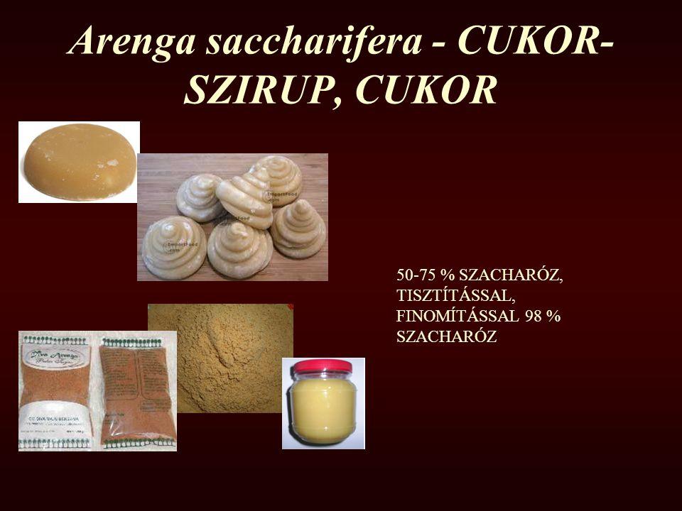 Arenga saccharifera - CUKOR-SZIRUP, CUKOR