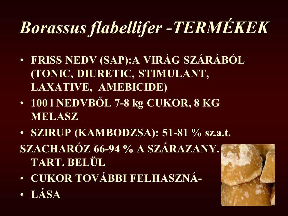 Borassus flabellifer -TERMÉKEK