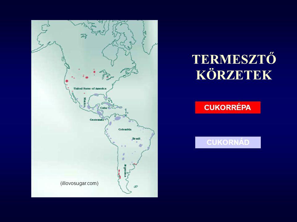 TERMESZTŐ KÖRZETEK CUKORRÉPA CUKORNÁD (illovosugar.com)