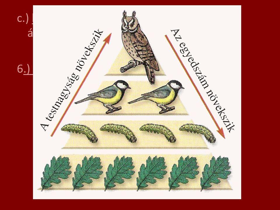 c.) lebontók: nagy egyedszám, szerves anyag átalakítása végül szervetlenné 6.) Táplálkozási piramis: