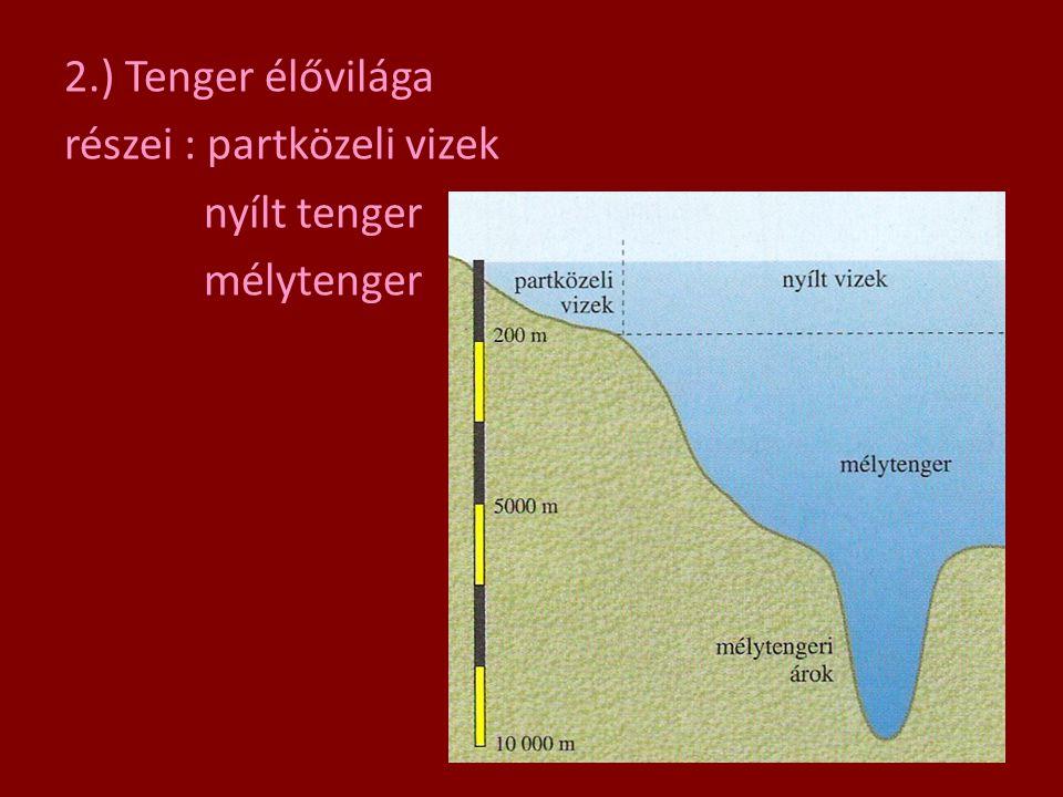 2.) Tenger élővilága részei : partközeli vizek nyílt tenger mélytenger