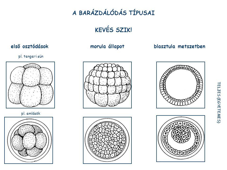 A BARÁZDÁLÓDÁS TÍPUSAI