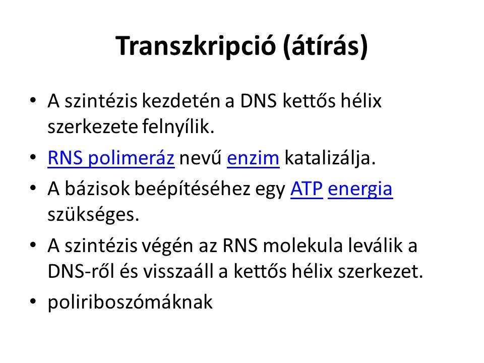 Transzkripció (átírás)