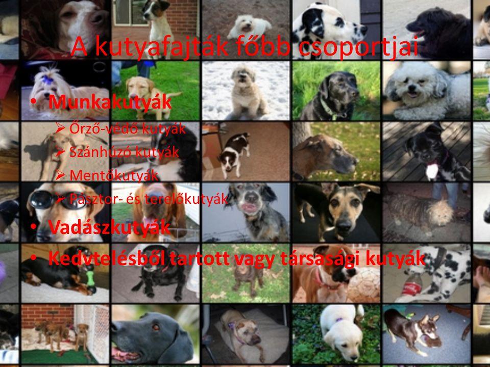 A kutyafajták főbb csoportjai