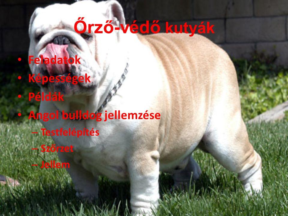 Őrző-védő kutyák Feladatok Képességek Példák Angol bulldog jellemzése